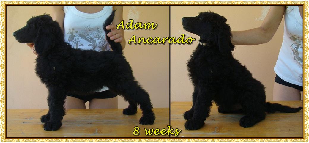 Adam - 8 týdnů starý