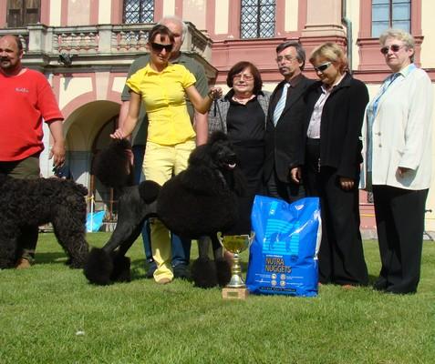 BIS! Bruno se stal Nej pudlem speciální výstavy a pak i Nej psem celé Hlubocké výstavy!!!