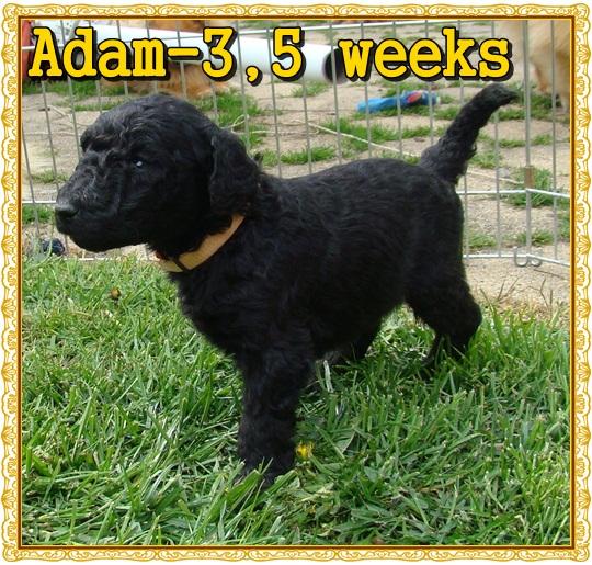 Adam Ancarado-3,5 týdne starý
