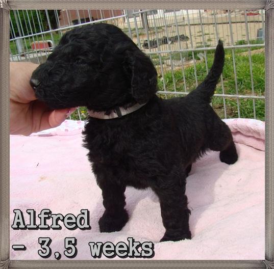 Alfred Ancarado-3,5 týdne starý