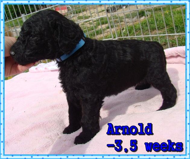 Arnold Ancarado-3,5 týdne starý