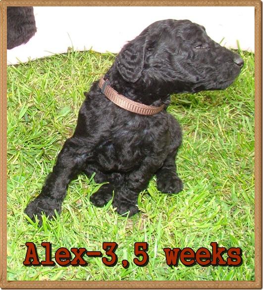 Alex Ancarado-3,5 týdnů starý
