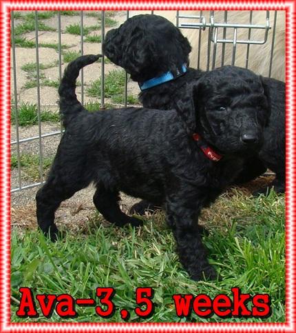 Ava Ancarado-3,5 týdne stará