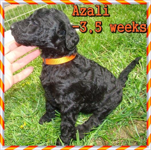 Azali Ancarado-3,5 týdne stará