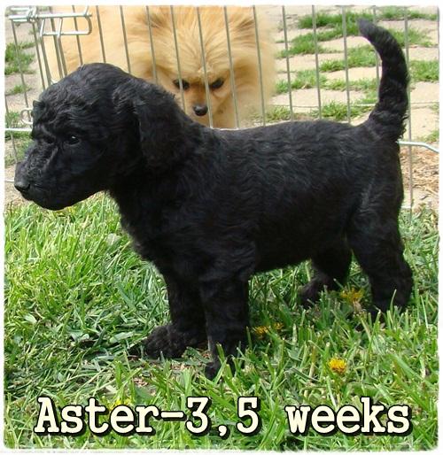 Aster Ancarado-3,5 týdne stará